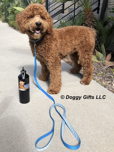 our-doggygifts-friend-charlie-wearing-coastal-pet-lazer-brite.jpg
