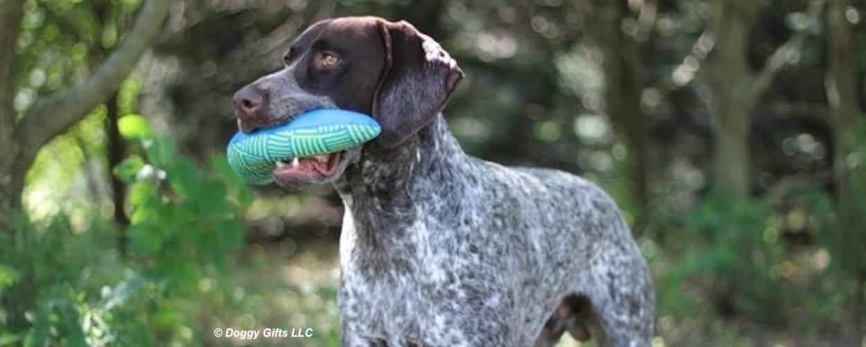 rascals-fetch-dog-toys-with-ruger.jpg