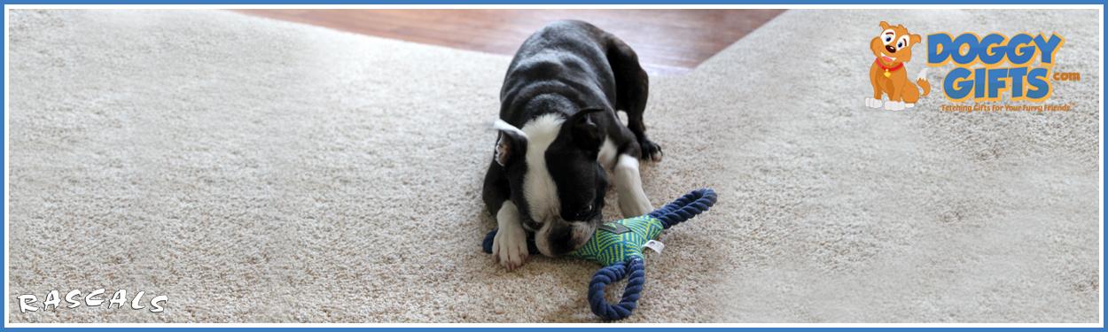 rascals-fetch-dog-toys.jpg