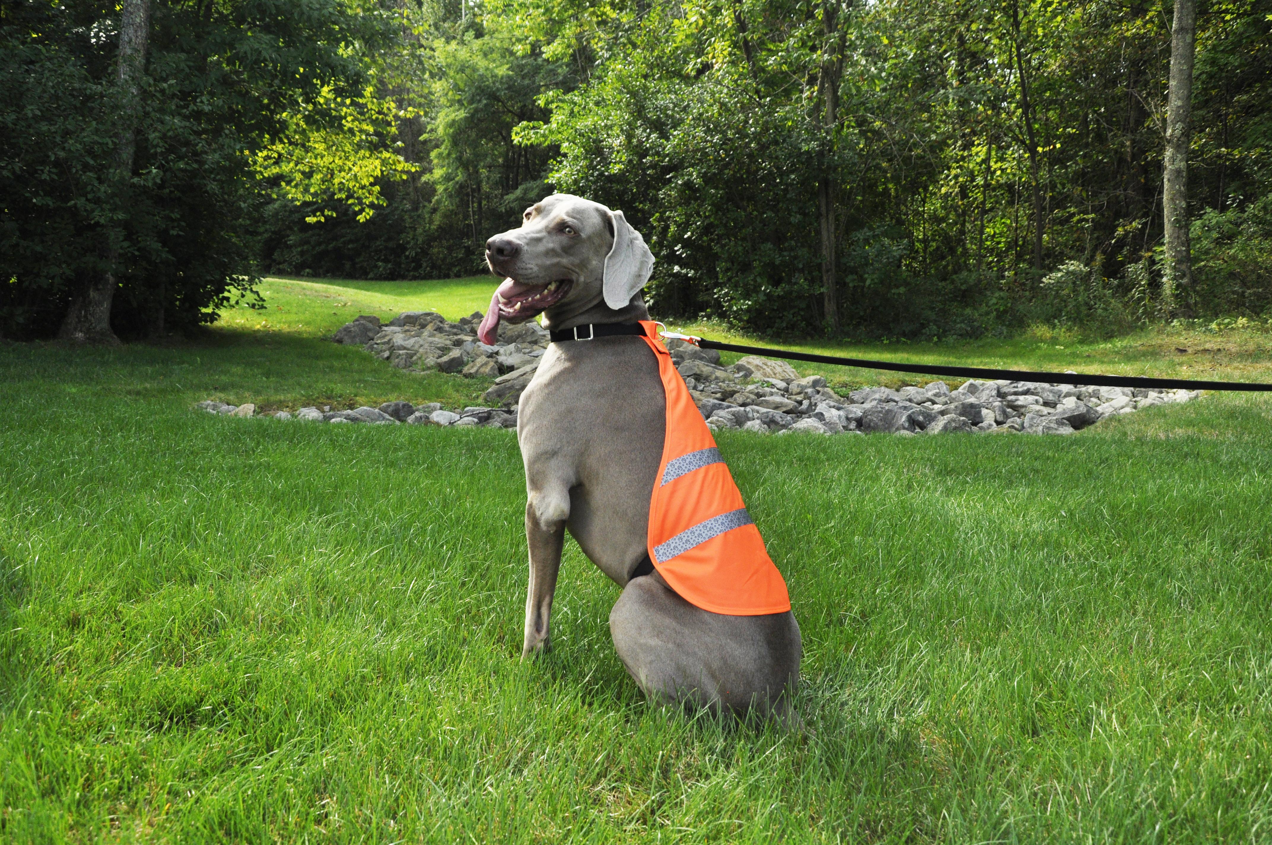 Coastal Pet Reflective Safety Vest