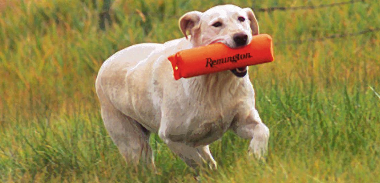 remington-dog-toys.jpg