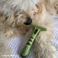 Hamilton models with Safari by Coastal Pet Double Row Undercoat Dog Rake