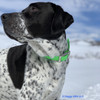 Oliver Loves His Coastal Pet Pro Waterproof Standard Dog Collar Personalized (4611E) Green. Great for water and snow playtime too!