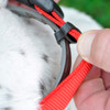 Coastal Pet Hideaway Adjustable Flea Collar Protector How It Works