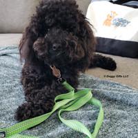 Coastal Pet K9 Explorer Brights Scissor Snap Dog Leash
