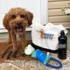konatheminidood loves his Coastal Pet Rascals Fetch Fox With Rope Dog Toy
