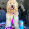 Lilly has fun in the car wearing her Coastal Pet Pro Waterproof Dog Collar and Leash