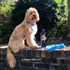 Miller wearing Waterproof Adjustable Dog Collar and Leash in Aqua color