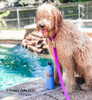 Lilly swimming in her Coastal Pet Pro Waterproof Adjustable Collar And Leash