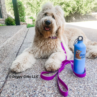 Lilly loves a day at the pool with her Coastal Pet Pro Waterproof Leash and Collar Set