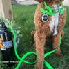 Kona close up Pro Waterproof dog collar waterproof dog leash waterproof dog harness in lime