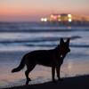 Coastal Pet silicone blinker light