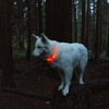 USB Light Up Ring On Dog