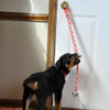 Dog Using The Advance By Coastal Pet Potty Training Bells Red With Paws Shown