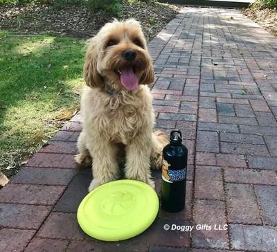 Miller loves his Pro Fit Flying Disc Dog Toy