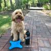 Miller loves his Coastal Pet Pro Fit Flying Jack Dog Toy