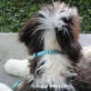 Henry looks handsome in his Coastal Pet Ribbon Weave Teal Gradient Chevrons Collar and Leash