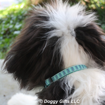 Henry looks awesome in his Coastal Pet Ribbon Weave Teal Gradient Chevrons Collar
