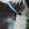 Henry Up Close in his Coastal Pet Ribbon Weave Teal Gradient Chevrons Collar and Leash