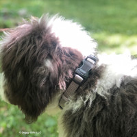 Henrythesheepadoodle looks handsome in his Coastal Pet Inspire Collar Details
