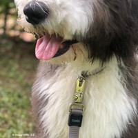 Henrythesheepadoodle wearing his Coastal Pet Inspire Leash