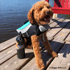 Kona wearing Alcott Life Jacket
