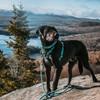 K9 Explorer Brights Lake Collar, Leash and Harness