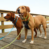 K9 Explorer Brights Meadow Collar, Rope Leash, Harness and Lake Collar, Leash and Harness