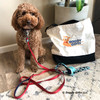 Kona handsome in Life Is Good® Padded Leash