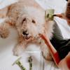 Hamilton says brush me and loves his Safari grooming tools W418NCL00