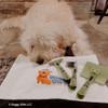 Hamilton enjoys grooming time with Safari grooming tools W418NCL00