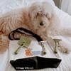 Hamilton models Safari by Coastal Pet Self-Cleaning Slicker Brush, De-matting Comb, Double Row Undercoat Dog Rake, Dog Comb Medium/Fine