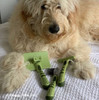 Hamilton models his Safari Grooming Self-Cleaning Slicker Brush, De-matting Comb, Double Row Undercoat Dog Rake
