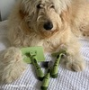 Hamilton models his Safari Grooming Self-Cleaning Slicker Brush, De-matting Comb, Double Row Undercoat Dog Rake