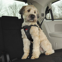 Easy Rider by Coastal Pet Adjustable Car Dog Harness Black