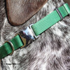 Ruger wearing Coastal Pet Metal Buckle Nylon Dog Collar  HUN Hunter Green