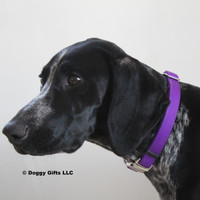 Zenzi wearing Coastal Pet Metal Buckle Nylon Dog Collar PUR Purple