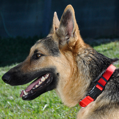 Coastal Pet Adjustable Nylon Dog Collar With Plastic Buckle Red