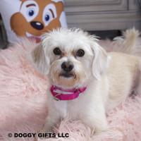 Sweet Mia and her Coastal Pet Martingale Adjustable Nylon Dog Collar (6407) Pink Flamingo PKF