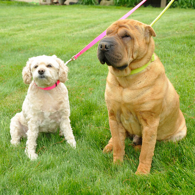 Coastal Pet Nylon Dog Leash Two Dogs Lime and Neon Pink