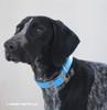 Zenzi loves her Coastal Pet Standard Nylon Dog Collar (301) Blue Lagoon BLL