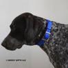Ruger loves his Coastal Pet Standard Nylon Dog Collar (301) Blue BLU