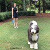Henrythesheepadoodle and Mom Taking a Walk With Coastal Pet Power Walker Retractable Dog Leash