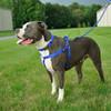 Coastal Pet Adjustable Nylon Comfort Wrap Dog Harness With Dog With Rope Dog Leash