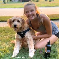 Coastal Pet Comfort Soft Wrap Reflective Adjustable Dog Harness
