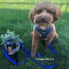 Kona wearing personalized harness and leash