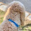 Cooper wearing Coastal Pet plastic buckle dog collar personalized