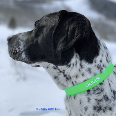 Oliver Loves His Coastal Pet Pro Waterproof Standard Dog Collar Personalized (4611E)