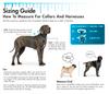 Coastal Pet Double Ply Nylon Dog Leash Personalized  Sizing Information