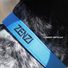 Close up personalization Zenzi wearing her Coastal Pet Double Ply Standard Nylon Dog Collar Personalized (2901E) Blue Lagoon BLL